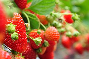 Horti Experience - Groenten & Fruit